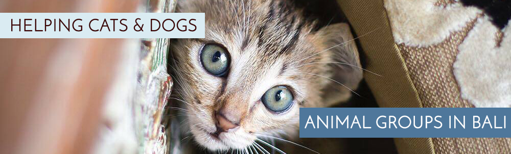 Animal Rescue Groups In Bali Helping Cats Dogs